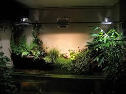 Польза домашних растений для человека