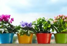 Важные правила по содержанию комнатных растений